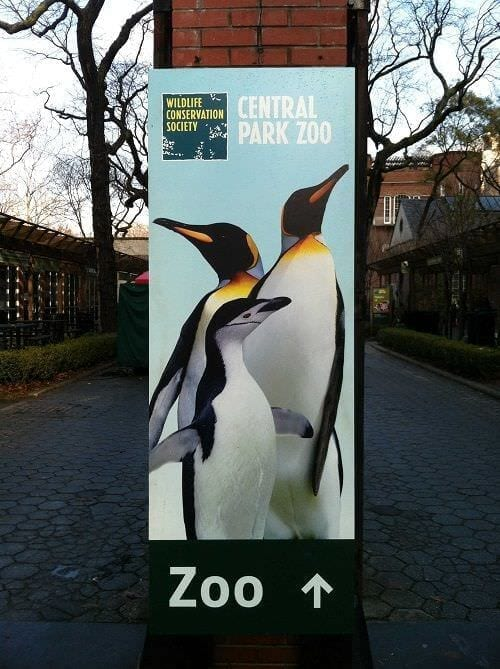 Visitare lo Zoo di Central Park di New York